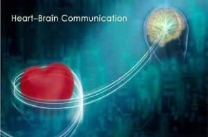 heart brain comunication la visión real del mundo